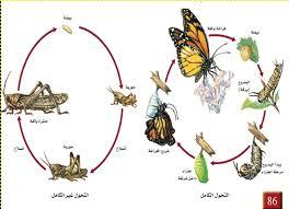 مهارات درس دورات حياة الحيوانات مادة العلوم الصف الثالث الابتدائي