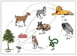 تحضير درس دورات حياة الحيوانات مادة العلوم الصف الثالث الابتدائي