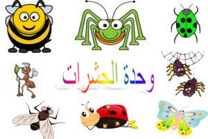 وحدة الحشرات رياض الاطفال 1440