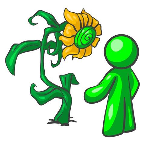 ركن الالعاب الادراكية وحدة النبات رياض اطفال