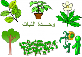 تمارين ادراكية وحدة النبات رياض اطفال