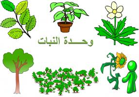 ركن العلوم وحدة النبات رياض اطفال