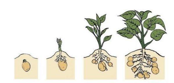 باوربوينت درس نمو النباتات مادة العلوم الصف الأول الإبتدائي الفصل الدراسي الأول 1442 هـ