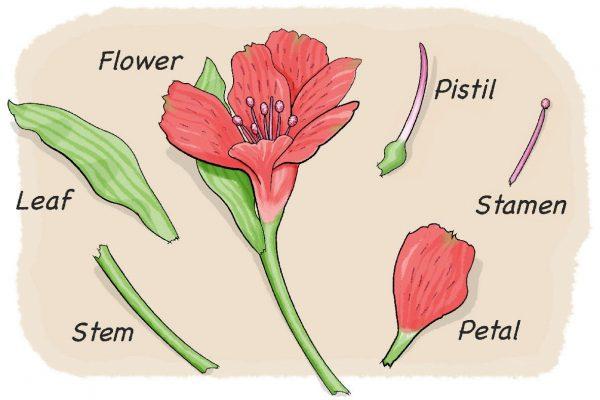 باوربوينت درس النباتات وأجزاؤها مادة العلوم الصف الأول الإبتدائي الفصل الدراسي الأول 1442 هـ