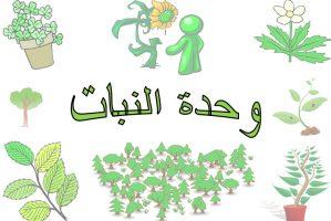 اعلان وحدة النبات رياض اطفال