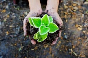 تحضير عين مادة علم البيئة نظام مقررات الفصل الدراسي الثاني